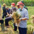 Langkah Strategis Dirjen Hortikultura Lakukan Percepatan Produksi dengan Gedor Horti